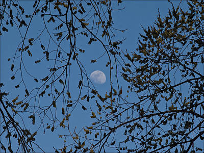 Moon And Trees 1 Poster by Robert Ullmann