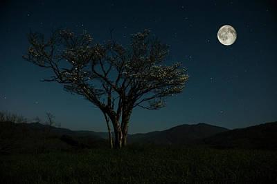 Moon Beams Poster by Stephanie Hensley