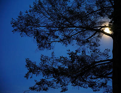 Moon Hiding In The Tree Poster by Lilia D