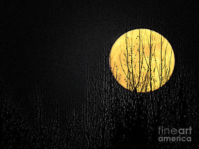 Moon Over The Trees Poster