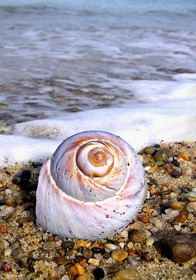 Moon Snail Poster by Charles Harden