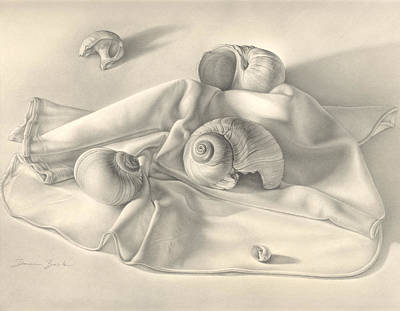 Poster featuring the drawing Moon Snail Still Life by Donna Basile