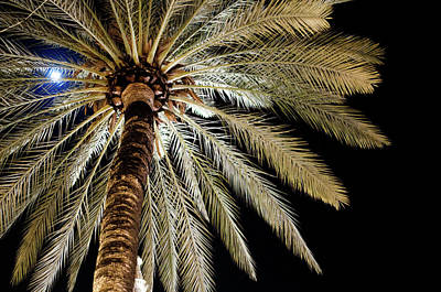 Moon Through Palm Tree Poster by Photo by Stuart Gleave