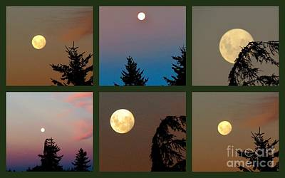 Moon Time Poster by Joyce Woodhouse