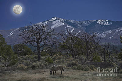 Moonlight Horse Poster by Jim Wright
