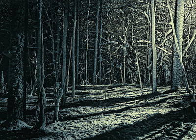 Moonlight Through The Trees Poster by Bob Orsillo