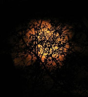 Moonlit Leaves Poster