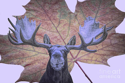 Poster featuring the photograph Moonlit Moose by Ray Shiu