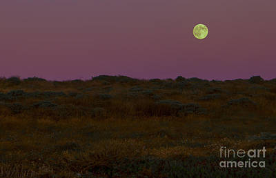 Moonrise In Bodega Bay Poster by Diane Diederich