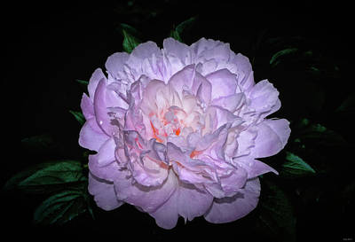 Moonstone Peony - Paeonia Hybrid 001 Poster by George Bostian