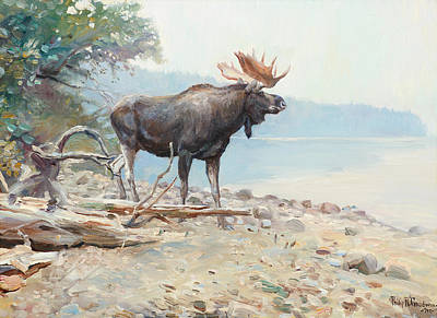 Moose At Lake Mcdonald Poster by Celestial Images