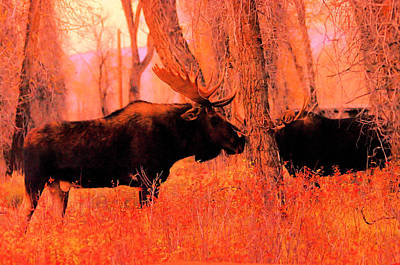 Moose In The Forest Poster by Jeff Swan