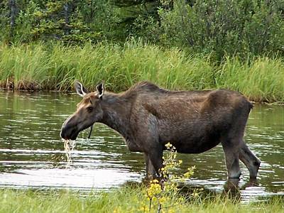 Poster featuring the photograph Moose Pond by Adam Owen