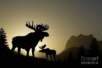 Moose Sunset Poster by Anthony Djordjevic