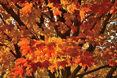 Poster featuring the photograph Moraine Hills Sugar Maple by Ray Mathis