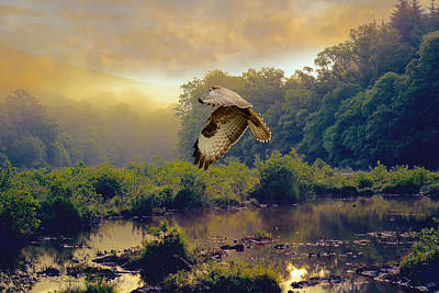 Poster featuring the photograph Morning Buzzard by Roy  McPeak