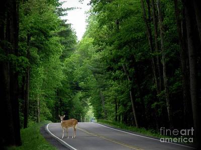Morning Deer Poster by Anthony Djordjevic