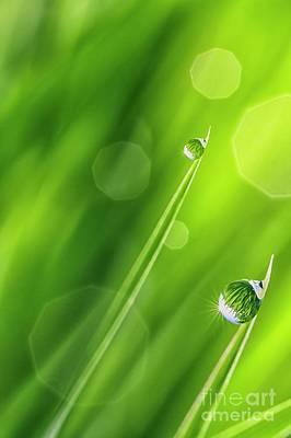 Morning Dewdrops Iv Poster