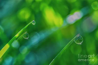 Morning Dewdrops V Poster