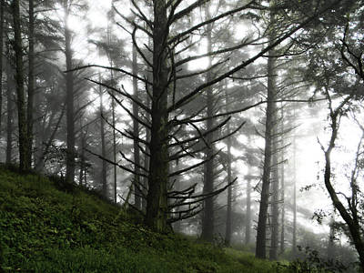 Poster featuring the photograph Morning Forest Fog II by Pacific Northwest Imagery