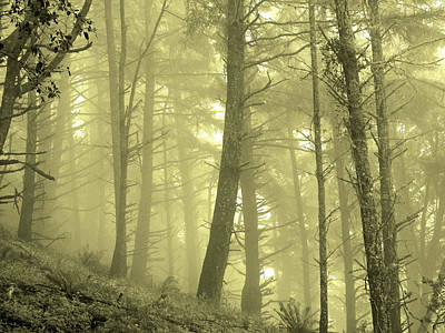 Poster featuring the photograph Morning Forest Fog by Pacific Northwest Imagery
