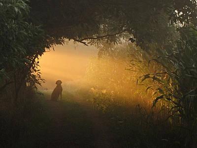 Morning Glory Poster by Rita Boyd