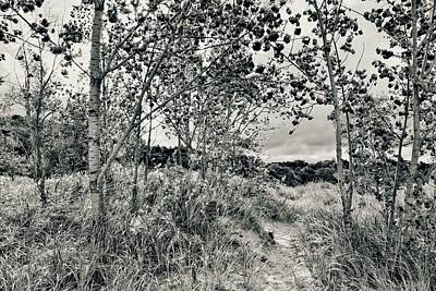 Poster featuring the photograph Morning In The Dunes by Michelle Calkins