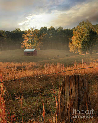 Morning Light Poster by Lori Deiter