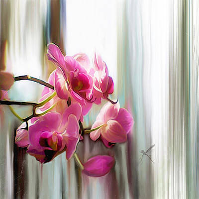 Morning Light Orchids Poster