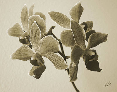 Morning Orchid Poster