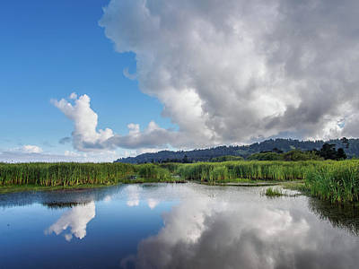 Poster featuring the photograph Morning Reflections On A Marsh Pond by Greg Nyquist