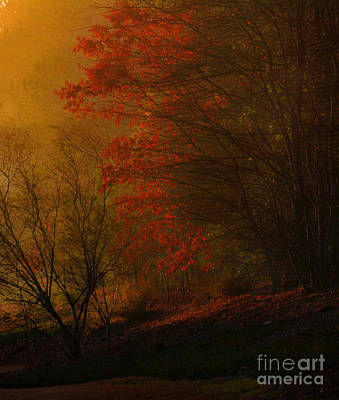 Morning Sunrise With Fog Touching The Tree Tops In Georgia. Poster