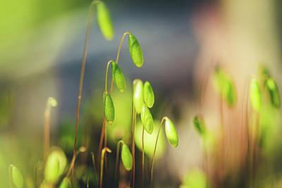 Moss Poster by Cindy Grundsten