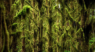 Moss Covered Trees Poster by Pelo Blanco Photo