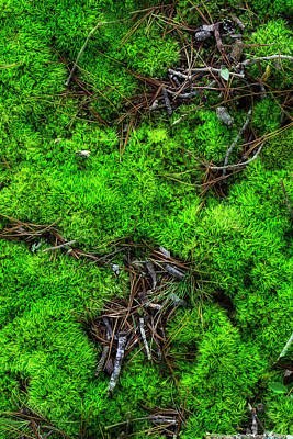 Poster featuring the photograph Moss On The Hillside by Mike Eingle