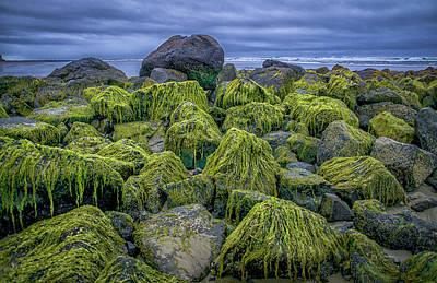 Moss Rocks Poster