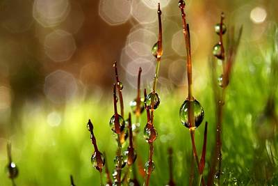 Moss Sparkles Poster by Sharon Johnstone