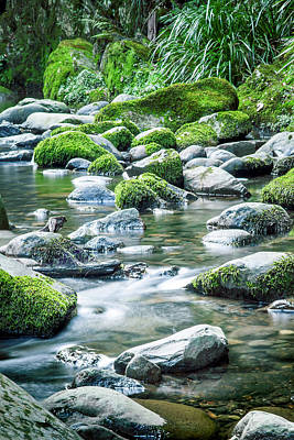 Mossy Forest Stream Poster by Az Jackson