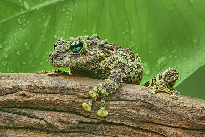 Poster featuring the photograph Mossy Frog by Nikolyn McDonald