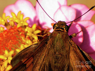 Moth On Pink And Yellow Flowers Poster