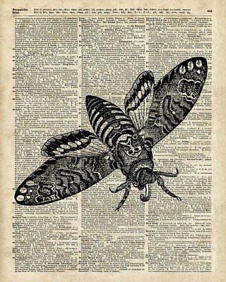 Moth Over Dictionary Page Poster by Jacob Kuch