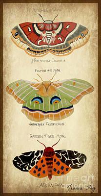 Moth Study Poster