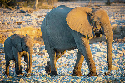 Mother And Baby Elephant Poster by Inge Johnsson