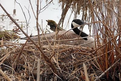 Mother Goose Nesting Poster by Lj White
