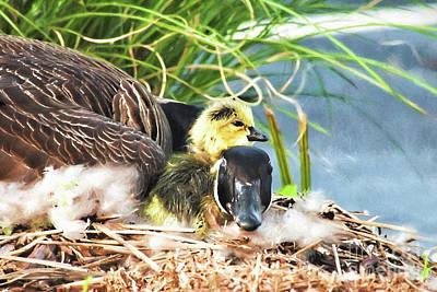 Mother Goose With Newborn Gosling  Poster by Vizual Studio