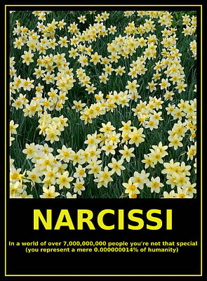 Motivational Irony - Narcissi Perspective Poster by Richard Reeve