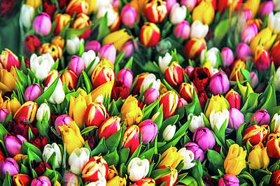 Motley Bunch Of Dutch Tulips Poster by Jenny Rainbow