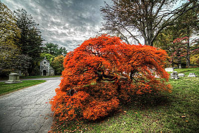 Mount Auburn Cemetery Beautiful Japanese Maple Tree Orange Autumn Colors Poster by Toby McGuire