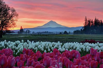 Mount Hood Sunrise Poster by Mark Whitt