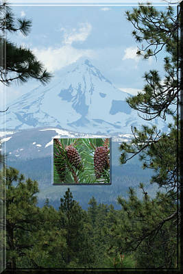 Mount Jefferson With Pines Poster